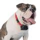 PetSafe Stubborn Dog Extra Receiver Collar