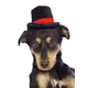Kyjen LED Christmas Top Hat for Dogs Large