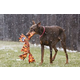 Jolly Pets Camo Flatheads Dog Toy X-Large