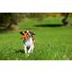 MajorDog DogX Small Dog Tug Toy