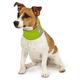 Insect Shield Reflective Dog Neck Gaiter LG Orange