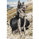 Hurtta Outdoor Trail Pack Dog Backpack Small
