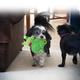 KONG Romperz Plush Dog Toy Medium Raccoon