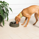 PetSafe Current Forest Pet Fountain Large