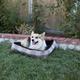 Kensington Citrus Slate Plaid Bolster Dog Bed MD