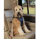 Deluxe Car Safety Harness Small
