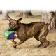 KONG Babbler Dog Toy Small