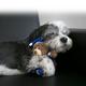 KONG Comfort Snuggles Plush Dog Toy Small