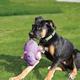KONG Phatz Dog Toy Medium Rhino