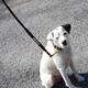 Personalized 5ft Dog Leash Havana/Chestnut