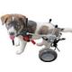 Best Friend Mobility Elite Dog Wheelchair XXSmall