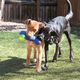 KONG Squeezz Action Bone Dog Toy Small
