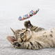KONG Active Curlz Assorted 2 Pack Cat Toy