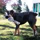 KONG Wubba No Stuff Large Dog Toy Zebra