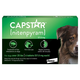 Capstar for Dogs 25lbs and Over 6 Month
