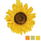 Tournesol Magnetic Tie-Back