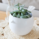 Finch Bird Ceramic Planter