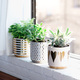 Ceramic Planters by Canfloyd