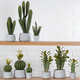 Potted Desert Cactus Collection by Torre & Tagus