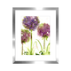 Alliums Picture and Frame