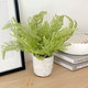 Solaro Potted Plant Collection by Torre & Tagus