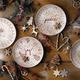 Ellen DeGeneres Holiday Serveware by Royal Doulton