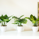 Villa Potted Plant Collection by Torre & Tagus