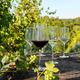 Pure Schott Zwiesel Set of 8 Wine Glasses