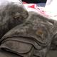 UGG Whitecap Cushion & Throw Collection