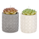 Assorted Cactus Candle with Cement Planter