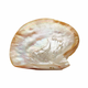 Pearl Shell Plate