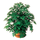 Anti Mosquito Plants - Set Of 2, One Size