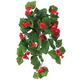 Begonia Hanging Stem by OakRidge™ Outdoor, One Size