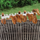 Wing Rack, One Size