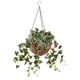 Fully Assembled Ivy Hanging Basket by OakRidge™ Outdoor, One Size