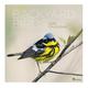 Backyard Birds Wall Calendar, One Size