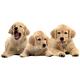 Children's Puppies 28 Piece Floor Puzzle, One Size