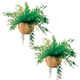 Mysterious Air Fern Set of 2, One Size