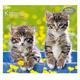 Kitten Wall Calendar