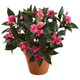 Artificial Impatiens Bush, One Size