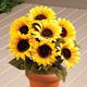 Silk Sunflower Bush