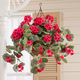 Artificial Geranium Hanging Bush, One Size