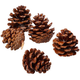 Starter Pinecones Refill, One Size