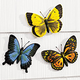 Butterfly Plaques - Set Of 3