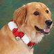 Christmas Dog Collar With Bells
