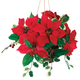 Silk Poinsettia Hanging Basket