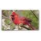 Personalized Cardinal 2 Year Planner, One Size