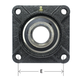 AMI Bearing 4-Bolt Flange 1-1/2in