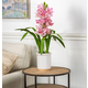 26-Inch Tall Real Touch Ultra-Realistic Pink Cymbidium Orchid Arrangement in Pot
