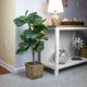 38-inch Mini Fiddle Leaf Fig Tree in Basket